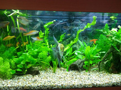 fish and plants
