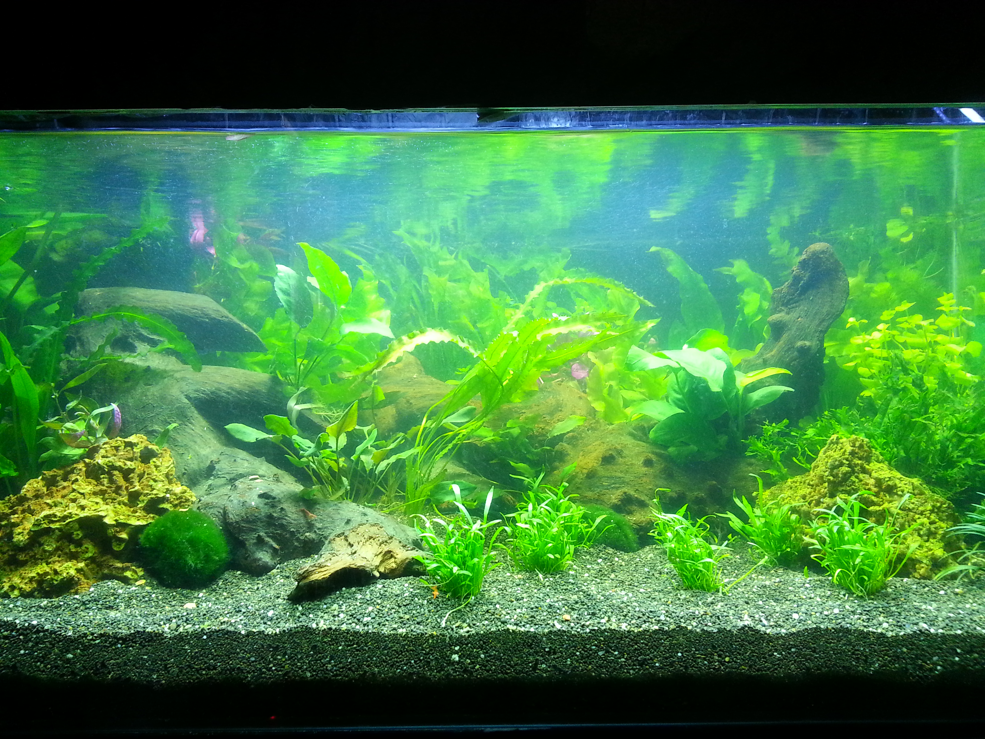 planted fishtanks