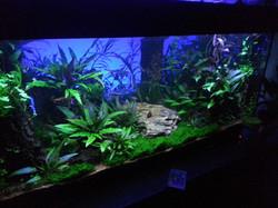 aquarium sussex