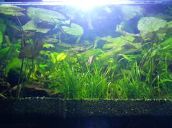 freshwater aquarium maintenance