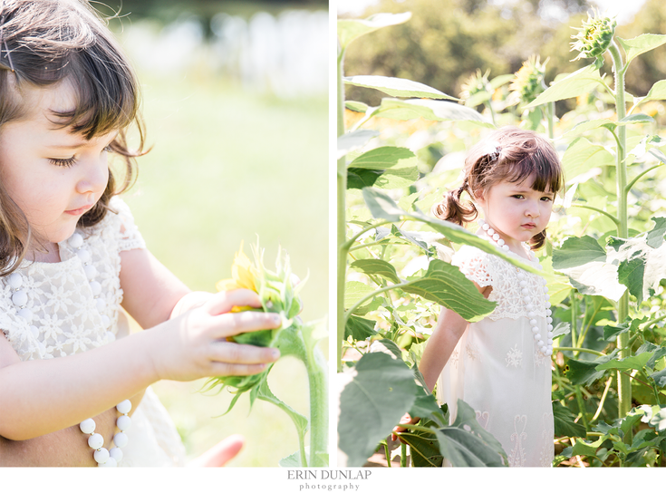 Little Lorelai : A Grinter Farms Sunflower Session