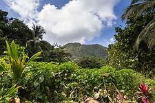 Туры на Мартинику
