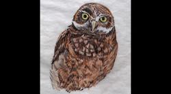 Spa Exterior Art Burrowing Owl