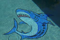 Shark Installed.JPG