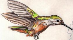 Spa Exterior Art, Rufous Hummingbird