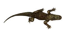 7 foot Handcut Glass Mosaic Alligator by