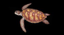 Original turtle art by Agape Tile