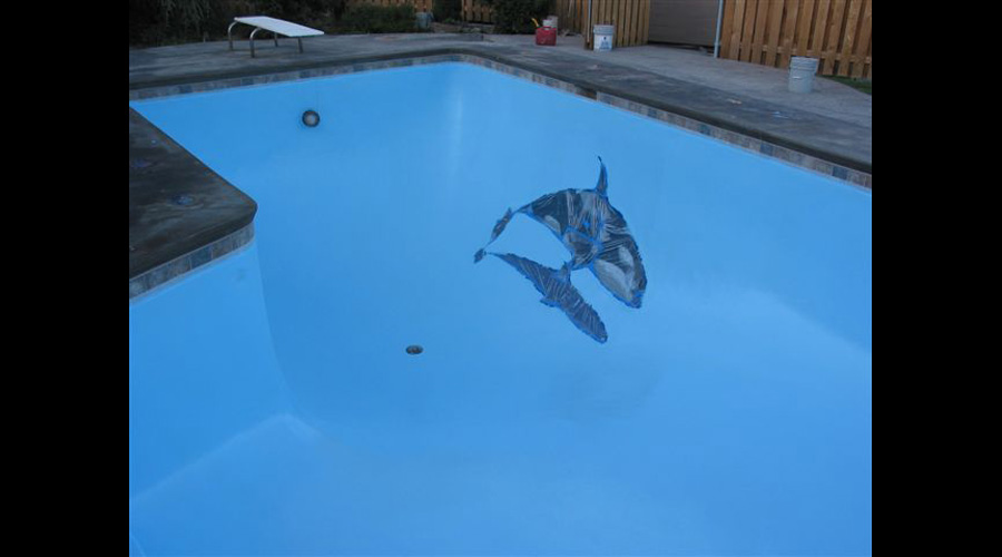 Killer Whale Swimming Pool