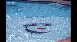 City Bites Swimming Pool Logo