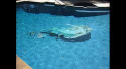 Blue Mermaid Swimming Pool 8