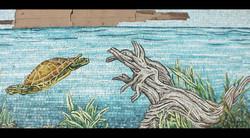 Swimming Florida Pond Turtle