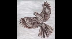 Spa Exterior Art, Flying Mockingbird