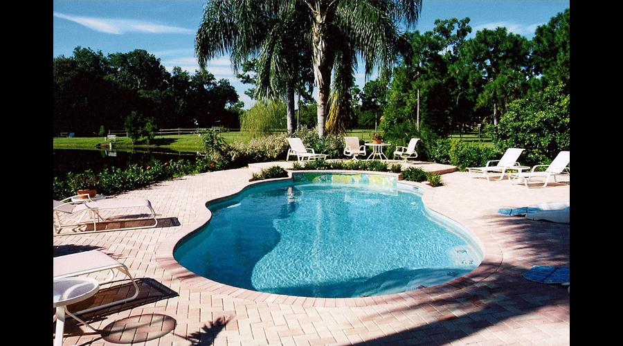 Tropical Swimming Pool, Tampa FL