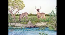 Swimming Pool Nature Wall, Deer