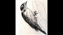 Spa Exterior Art, Woodpecker