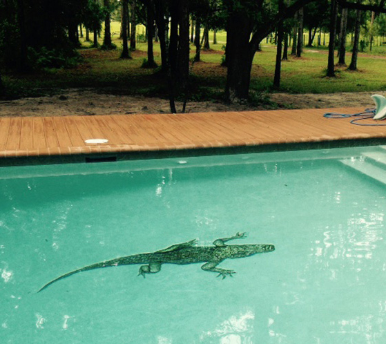 Custom Handcut Alligator Glass Mosaic Climbing Out of Pool
