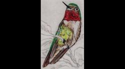 Spa Exterior Art, Ruby Hummingbird