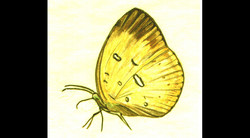 Spa Exterior Art, Yellow Butterfly