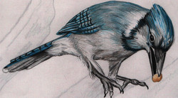 Spa Exterior Art, Bluejay with a Nut