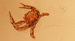 Pool Deep End, Swimout Ledge Crab