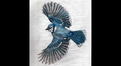 Spa Exterior Art, Flying Bluejay