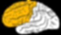 Gray726_frontal_lobe.png