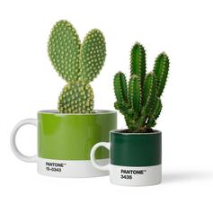 2 Cups Green cactus.tif