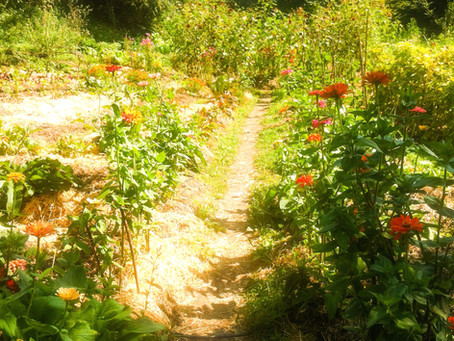 """Permaculture"" and the Secret of How to Thrive"