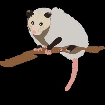 Opossum large.png