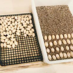 Egg digging is in full swing on the turtle farm!  #turtles #turtlesofinstagram #farmlife #shoals #madeinalabama