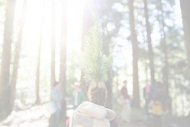 Tree%20Planting_edited.jpg
