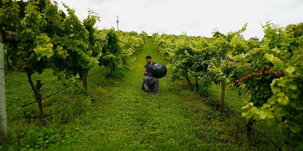 October Toms Cap Vineyard Spring Soundscape