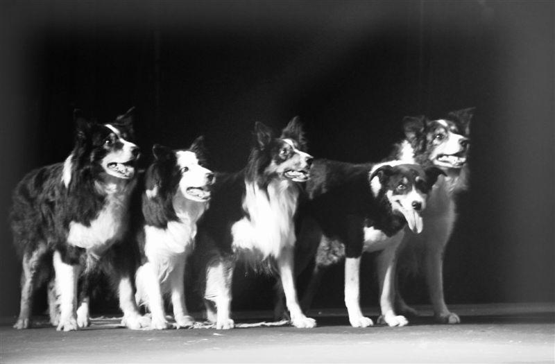 Numéro de chiens