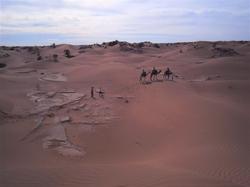骑骆驼跋涉