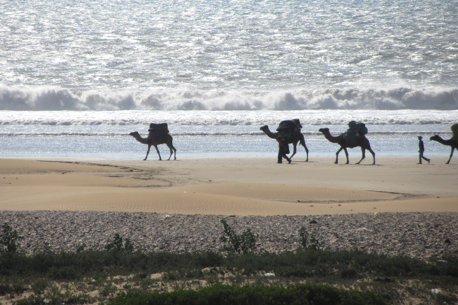 camel ridding Morocco