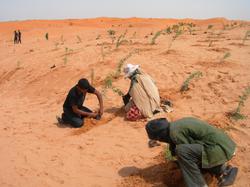 ökologische Bepflanzung Werkstatt
