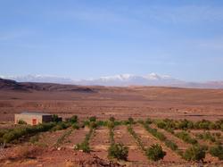 半沙漠的土地中农作