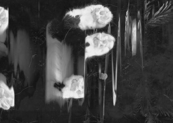 Kosmiska Katter - The Beast II