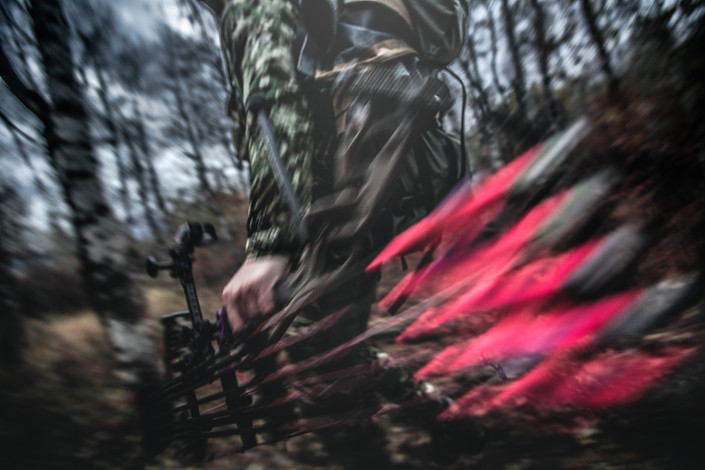 elk hunter making a move fast in aspen trees in Montana using a hoyt bow with pink fletchings