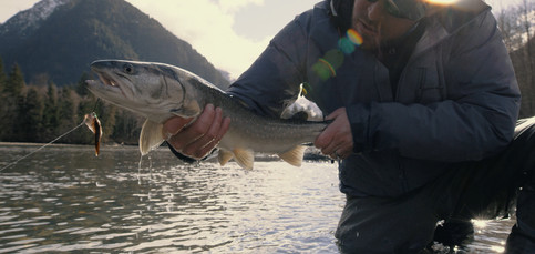 RED Raven 4.5k frame grab of a big Bull Trout with a streamer in its mouth