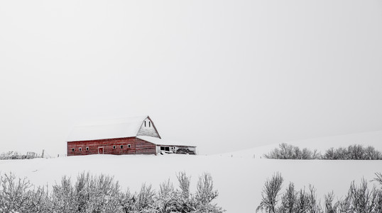Old red barn standing out in a white snow storm