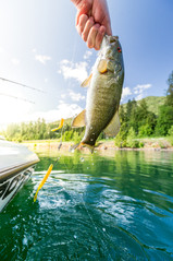 small mouth bass on lake pend orielle in North Idaho
