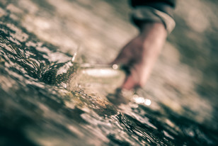releasing a small bull trout caught on a fly on a coastal remote river