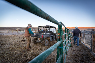 Rancher unloading Polaris Ranger with supplies to built temporary fence for moving cows on heaven on earth ranch in central Montana