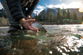 Fly fisherman releasing small bull trout from hands while fishing in Coastal British Columbia