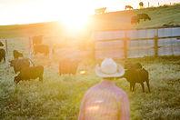 jason cows around wr.jpg