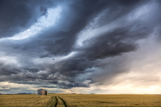 A storm is brewing over a golden wheat field with grain bins in it in Central Montanas Golden Triangle