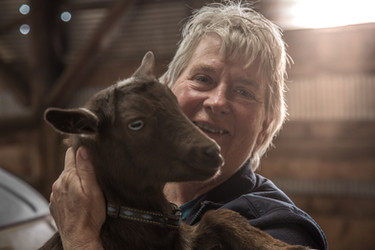 Goat farmer holding a goat in a barn with back light from a window