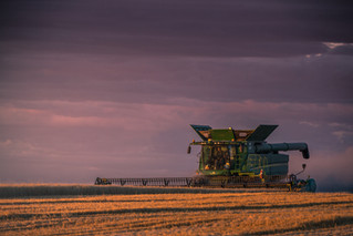 John Deere S680 cutting wheat in Central Montana in the Golden Triangle at sunset with purple clouds and a golden field