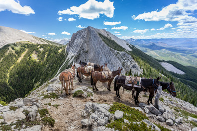 Pack horse and mule string sitting high atop fire lookout in the bob marshall wilderness area in Montana